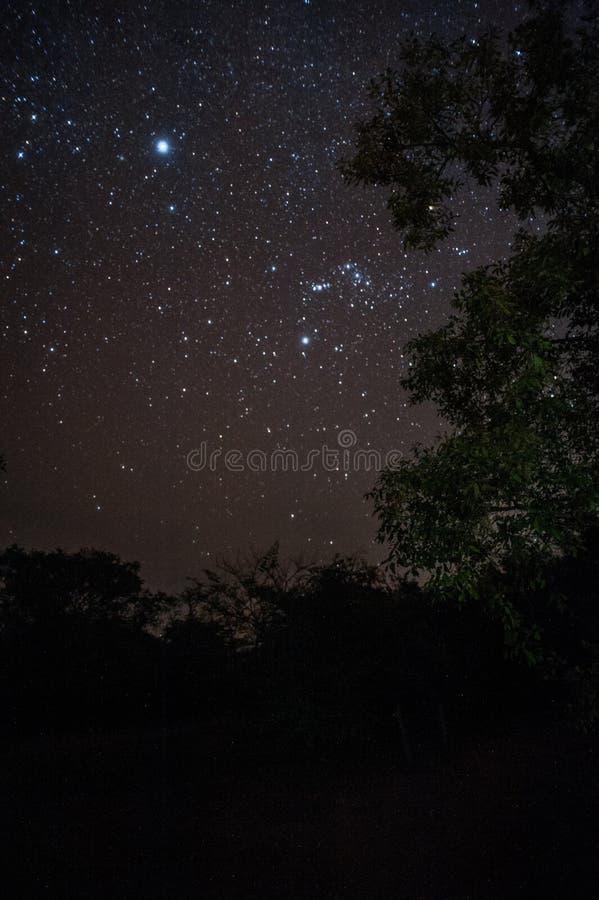 Εθνικές πάρκο Ziwa νυχτερινών αστεριών και κονσέρβα ρινοκέρων στοκ φωτογραφίες με δικαίωμα ελεύθερης χρήσης