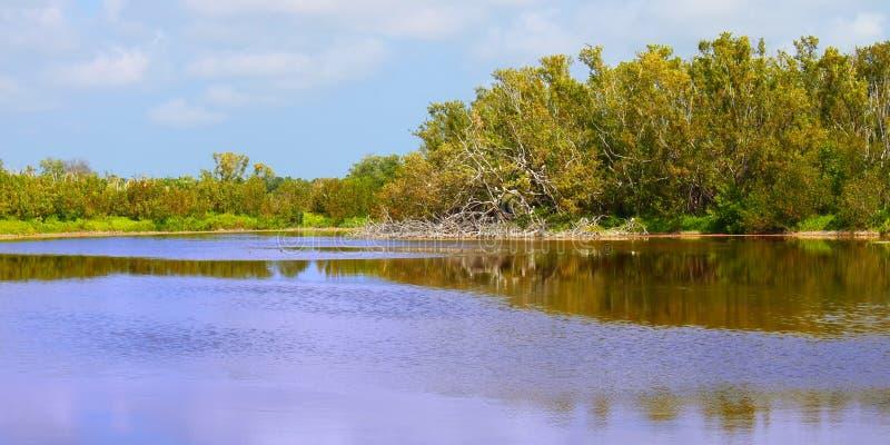 Εθνική λίμνη Eco πάρκων Everglades στοκ φωτογραφία με δικαίωμα ελεύθερης χρήσης