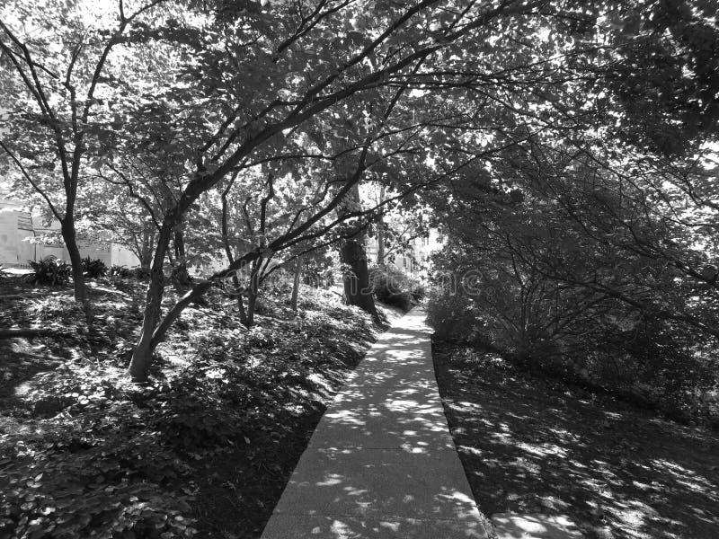 Εθνική διάβαση πεζών καθεδρικών ναών το καλοκαίρι στοκ εικόνα με δικαίωμα ελεύθερης χρήσης