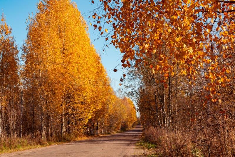 Εθνική οδός ασφάλτου μέσω του δάσους φθινοπώρου - όμορφο τοπίο φθινοπώρου στοκ φωτογραφίες με δικαίωμα ελεύθερης χρήσης