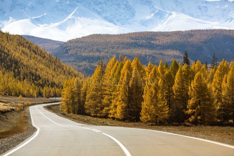 Εθνική οδός Chuysky Trakt με το φορτηγό και το κίτρινο δάσος φθινοπώρου της Δημοκρατίας Altai στοκ φωτογραφίες με δικαίωμα ελεύθερης χρήσης