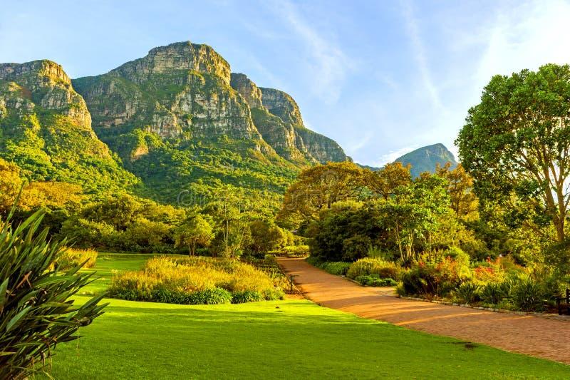 Εθνικός βοτανικός κήπος Kirstenbosch στο Καίηπ Τάουν, Νότια Αφρική στοκ εικόνες με δικαίωμα ελεύθερης χρήσης