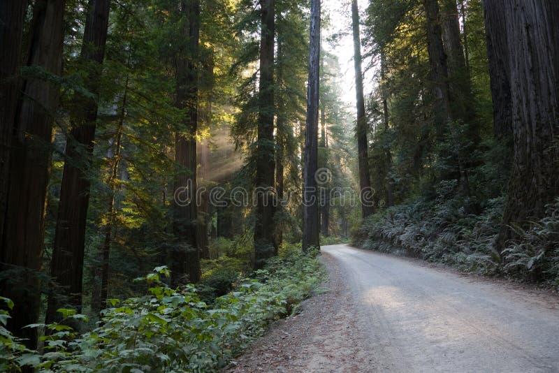 εθνικός δρόμος πάρκων redwood στοκ εικόνες