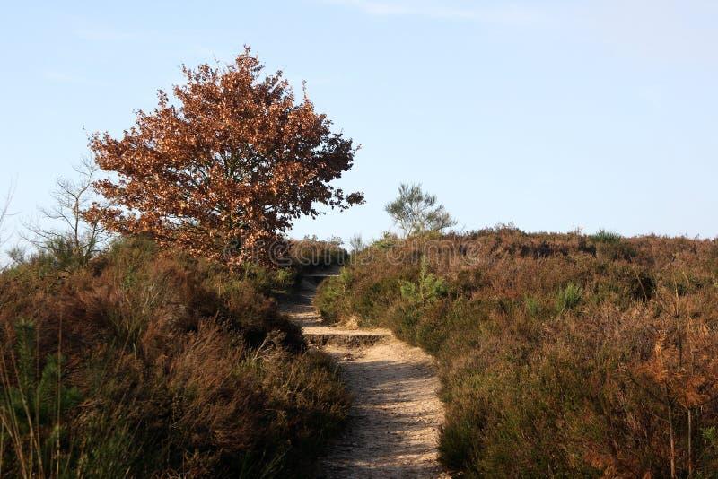 εθνικό δέντρο πάρκων στοκ εικόνες