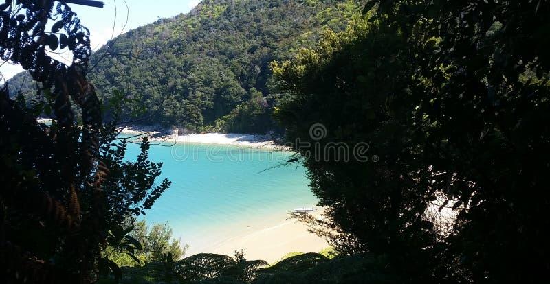 εθνικό νέο πάρκο tasman Ζηλανδία στοκ εικόνες με δικαίωμα ελεύθερης χρήσης