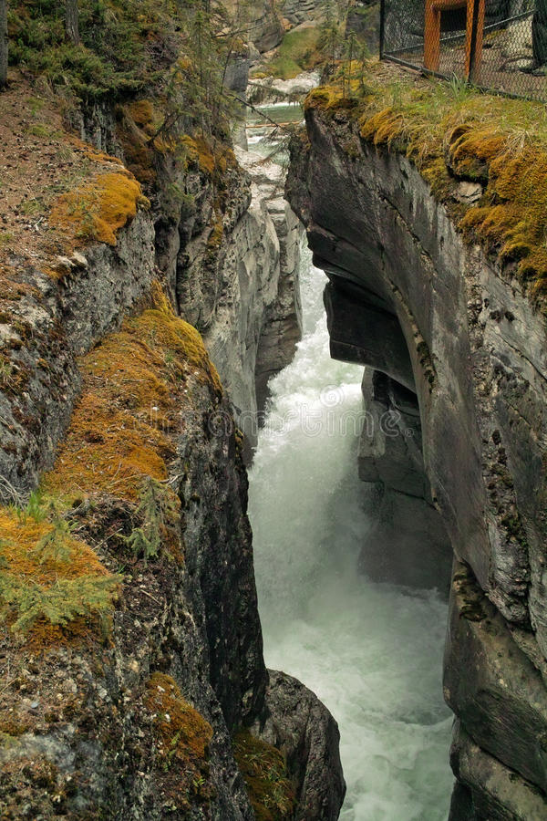 Εθνικό πάρκο ιασπίδων, Αλμπέρτα, Καναδάς. στοκ εικόνες με δικαίωμα ελεύθερης χρήσης