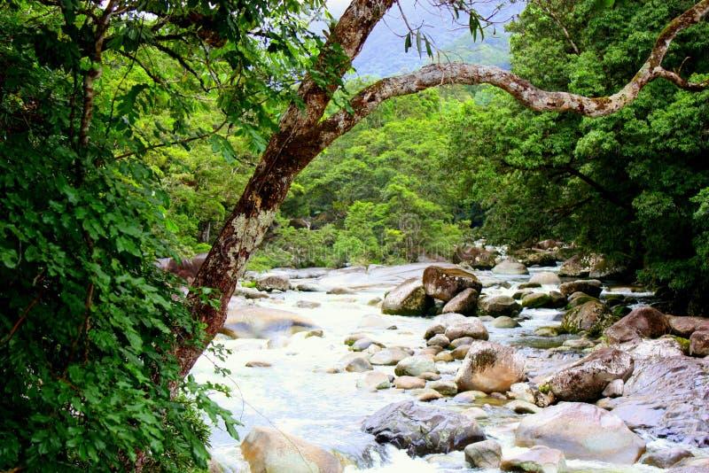 Εθνικό πάρκο φαραγγιών Mossman στοκ εικόνες