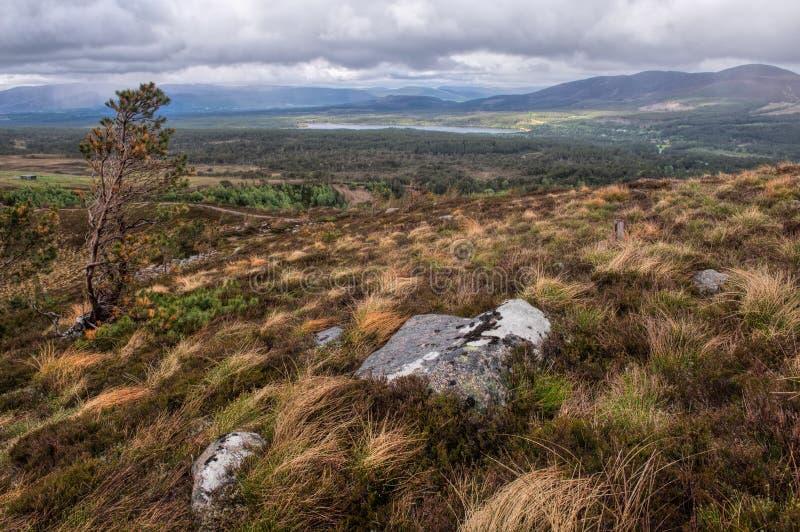 Εθνικό πάρκο Cairngorms, χέρσα περιοχή στοκ φωτογραφίες