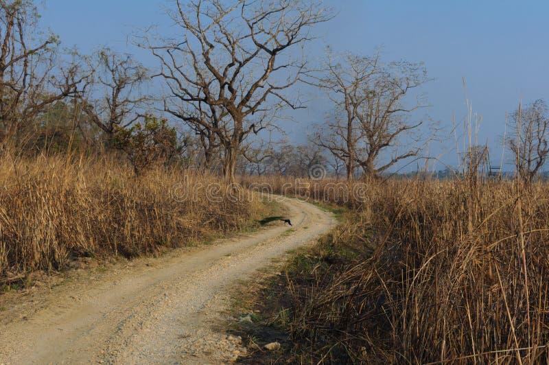 Εθνικό πάρκο Chitwan στο Νεπάλ Δρόμος στη ζούγκλα στοκ εικόνα