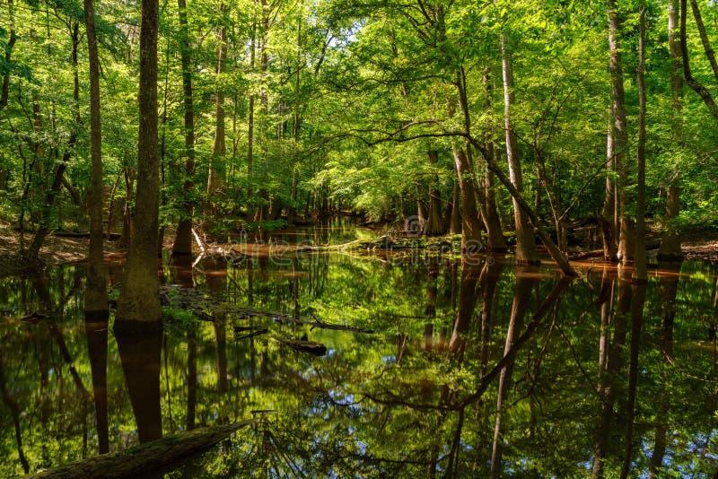 Εθνικό πάρκο Congaree στοκ φωτογραφία