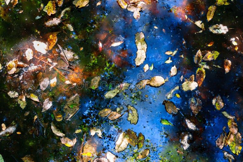Εθνικό πάρκο Congaree στοκ φωτογραφίες