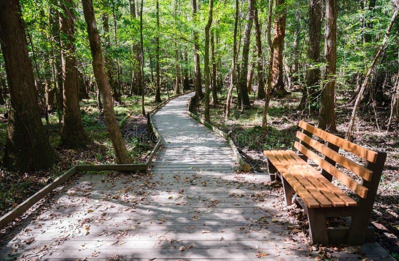 Εθνικό πάρκο Congaree στοκ εικόνες