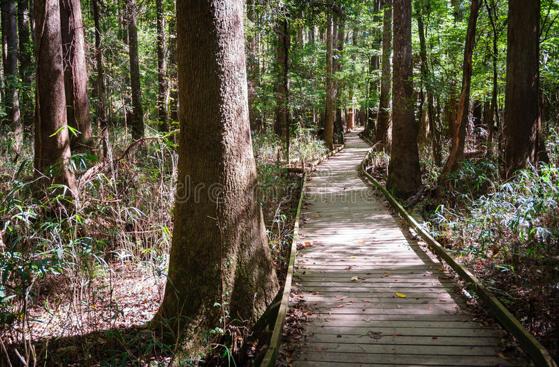 Εθνικό πάρκο Congaree στοκ φωτογραφία με δικαίωμα ελεύθερης χρήσης