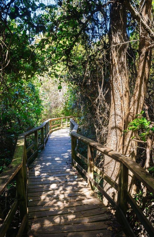 Εθνικό πάρκο Congaree στοκ φωτογραφίες με δικαίωμα ελεύθερης χρήσης