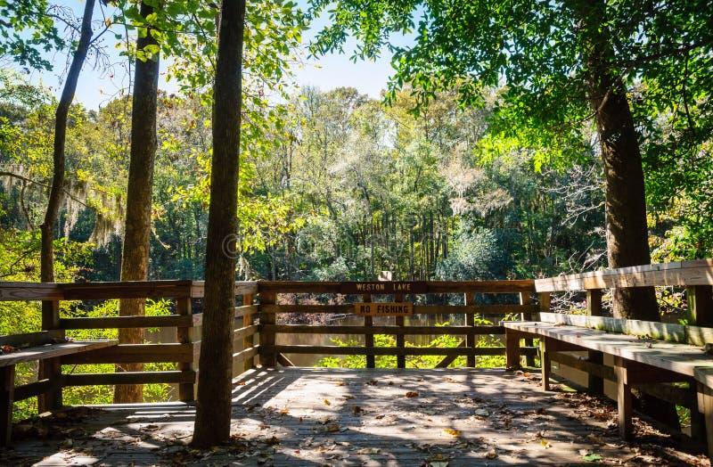 Εθνικό πάρκο Congaree στοκ εικόνες με δικαίωμα ελεύθερης χρήσης