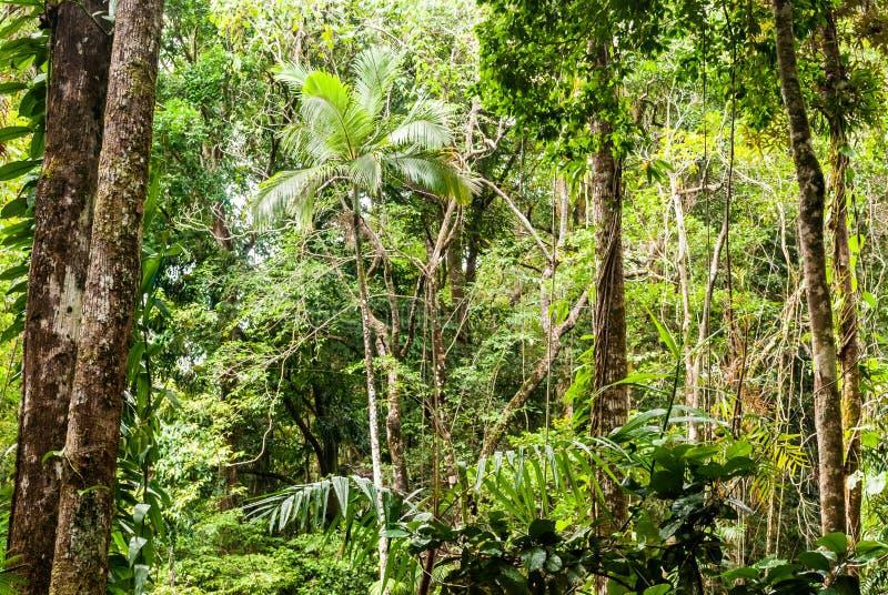 Εθνικό πάρκο Daintree στοκ εικόνα με δικαίωμα ελεύθερης χρήσης