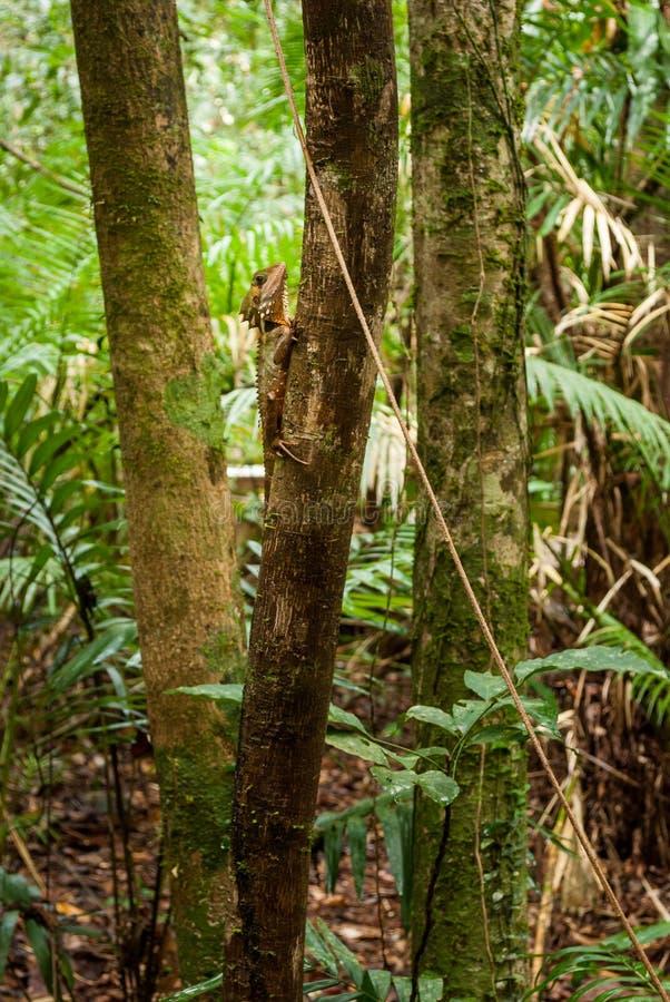 Εθνικό πάρκο Daintree στοκ εικόνες