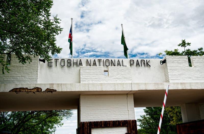 Εθνικό πάρκο Etosha, Ναμίμπια, Αφρική στοκ εικόνα με δικαίωμα ελεύθερης χρήσης