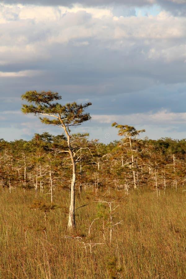Εθνικό πάρκο Everglades στοκ εικόνες