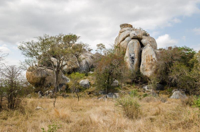 Εθνικό πάρκο Kruger, σαβάνα διάσημα βουνά kanonkop της Αφρικής κοντά στο γραφικό αμπελώνα νότιων άνοιξη στοκ εικόνες