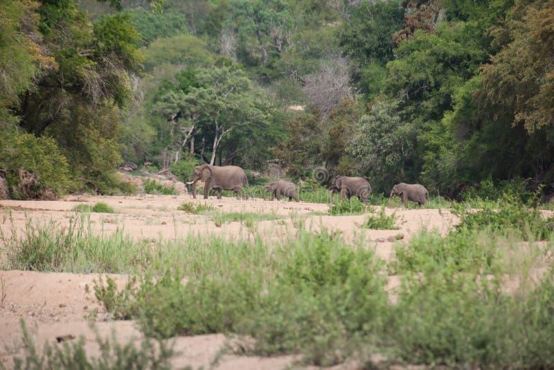 Εθνικό πάρκο Kruger, Mpumalanga, Νότια Αφρική στοκ εικόνα