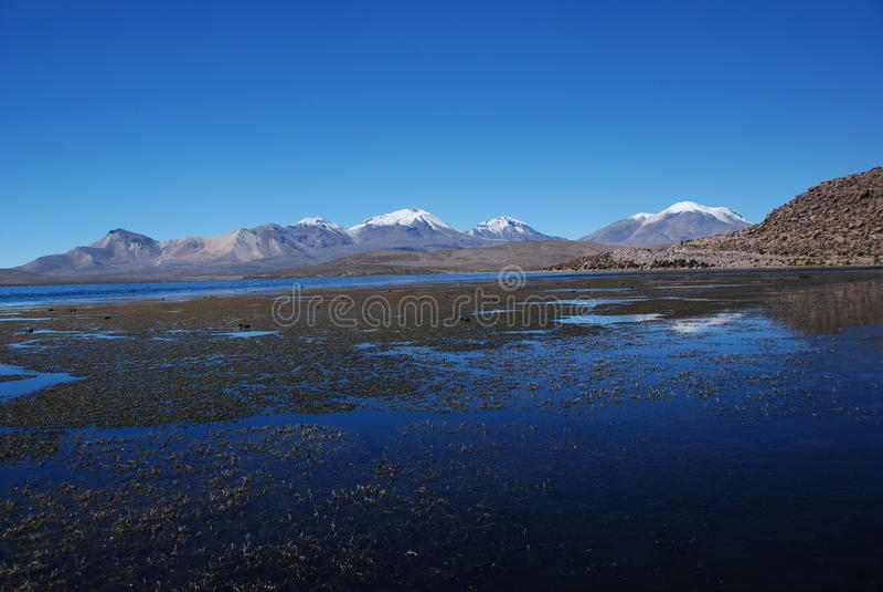 εθνικό πάρκο lauca της Χιλής στοκ εικόνες