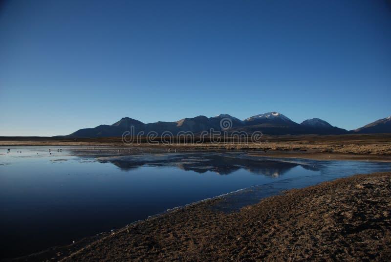 εθνικό πάρκο lauca της Χιλής στοκ φωτογραφία με δικαίωμα ελεύθερης χρήσης