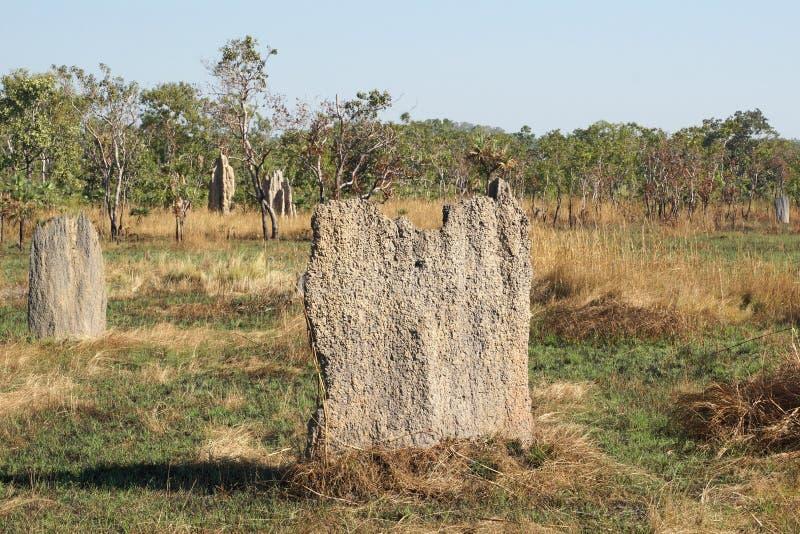 Εθνικό πάρκο Litchfield, Αυστραλία στοκ εικόνα