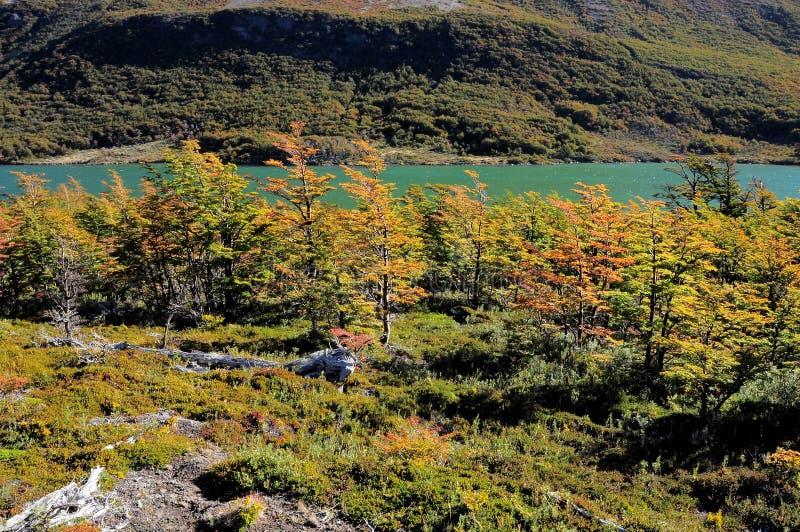 Εθνικό πάρκο Los Glaciares. στοκ εικόνα με δικαίωμα ελεύθερης χρήσης