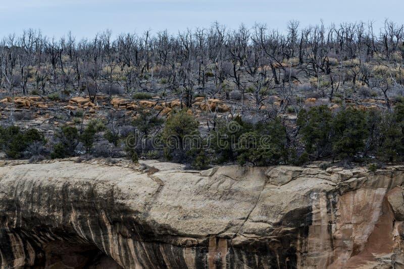 Εθνικό πάρκο Mesa verde - κατοικία απότομων βράχων στο τοπικό LAN βουνών ερήμων στοκ φωτογραφία με δικαίωμα ελεύθερης χρήσης