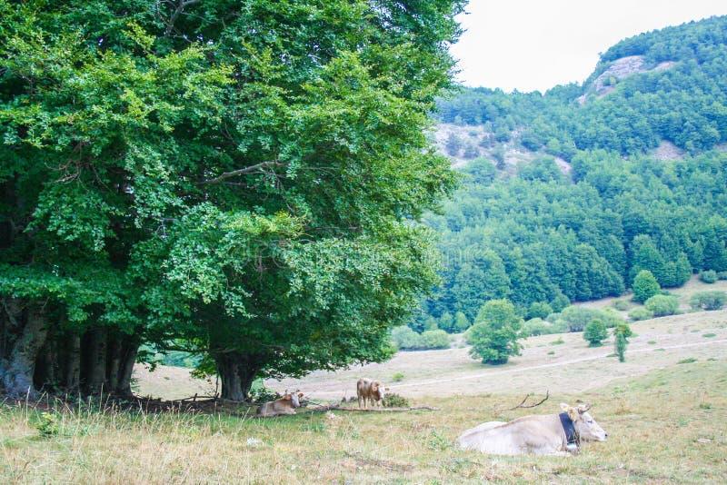 Εθνικό πάρκο Pollino στοκ φωτογραφία με δικαίωμα ελεύθερης χρήσης