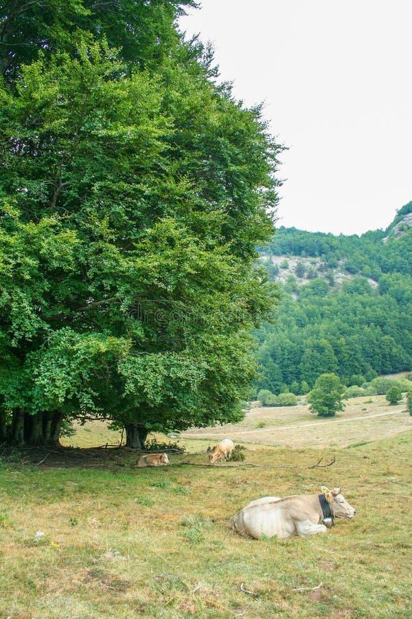 Εθνικό πάρκο Pollino στοκ φωτογραφίες