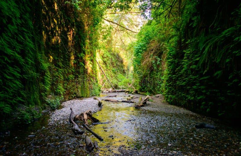 Εθνικό πάρκο Redwood στοκ φωτογραφίες