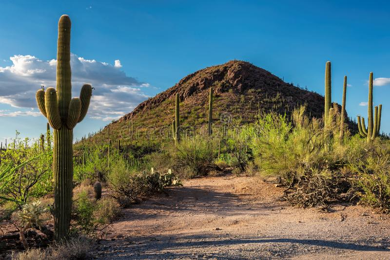 Εθνικό πάρκο Saguaro στοκ φωτογραφίες με δικαίωμα ελεύθερης χρήσης