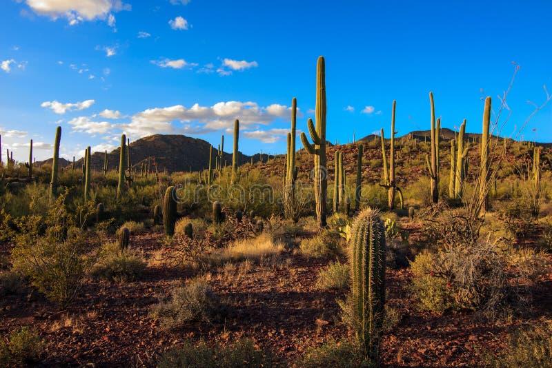 Εθνικό πάρκο Saguaro στοκ φωτογραφία με δικαίωμα ελεύθερης χρήσης