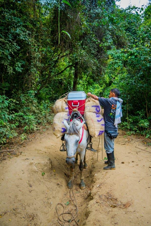 Εθνικό πάρκο Tayrona, Κολομβία στοκ φωτογραφίες με δικαίωμα ελεύθερης χρήσης