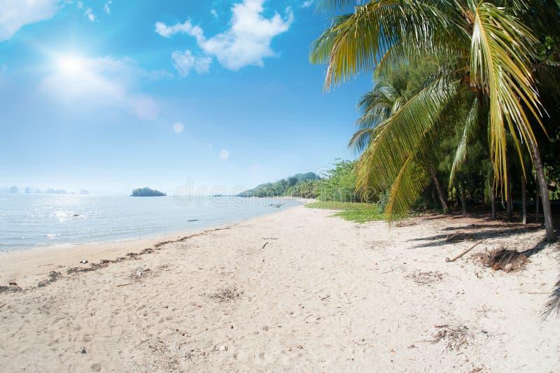 Ειδυλλιακή τροπική παραλία, φοίνικας, άσπρα άμμος και κρύσταλλο - καθαρίστε το νερό στοκ εικόνα με δικαίωμα ελεύθερης χρήσης