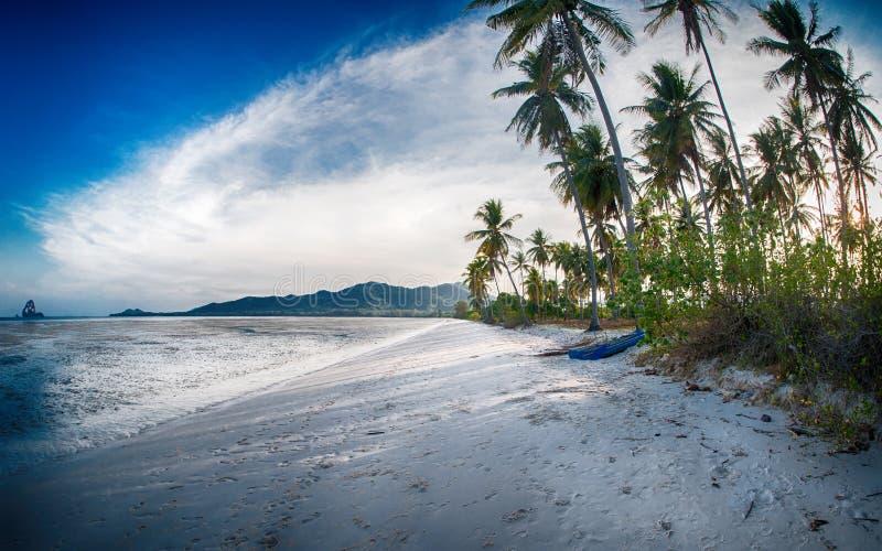 Ειδυλλιακή τροπική παραλία, φοίνικας, άσπρα άμμος και κρύσταλλο - καθαρίστε το νερό στοκ εικόνες με δικαίωμα ελεύθερης χρήσης