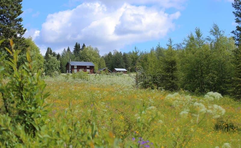 Ειδυλλιακό ανθίζοντας λιβάδι με διάφορα αγροτικά κτήρια σε Vaesterbotten στη Σουηδία στοκ φωτογραφία