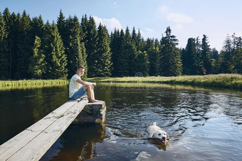 Ειδυλλιακό καλοκαίρι με το σκυλί στοκ εικόνες