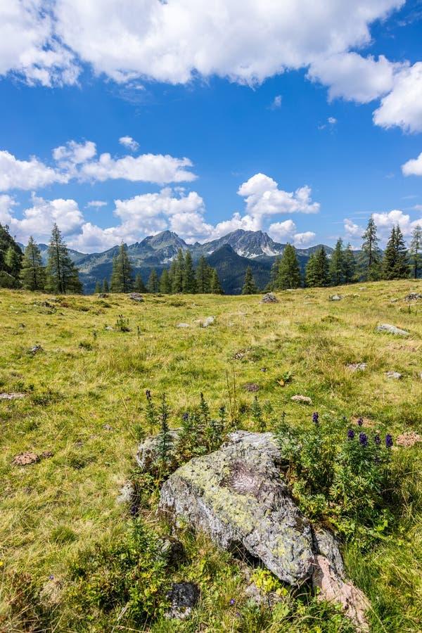 Ειδυλλιακό τοπίο βουνών στα όρη: Όμορφο τοπίο του λιβαδιού, των δέντρων, των βουνών και του μπλε ουρανού στοκ φωτογραφία με δικαίωμα ελεύθερης χρήσης