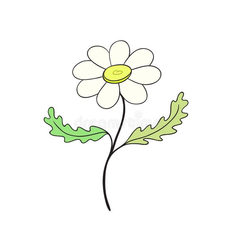 Εικονίδιο λουλουδιών Chamomile Συρμένη χέρι τυπωμένη ύλη Διανυσματικό σχέδιο αυτοκόλλητων ετικεττών Floral εσωτερική αφίσα απεικόνιση αποθεμάτων