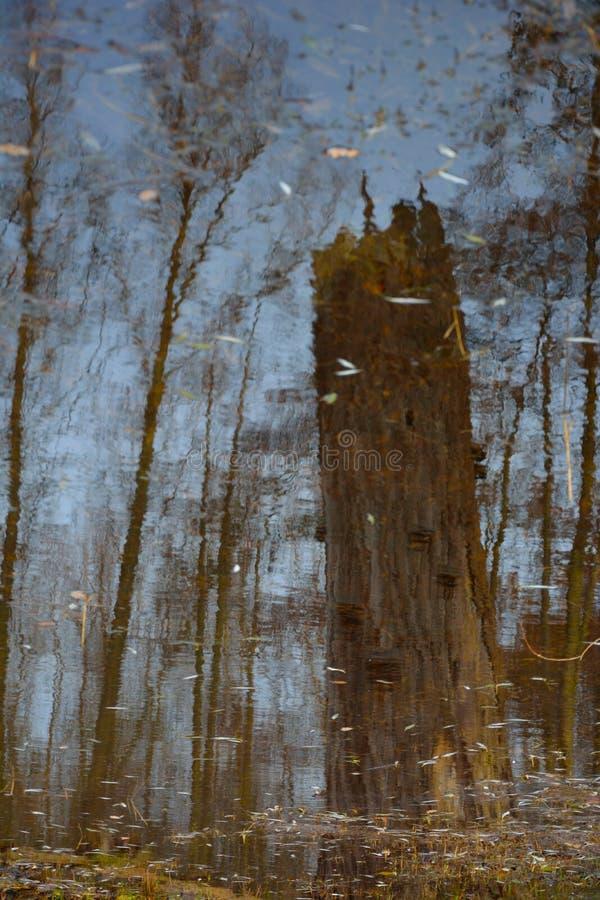 Εικόνα: αντανάκλαση των δέντρων σε μια ομάδα του νερού στοκ εικόνες με δικαίωμα ελεύθερης χρήσης