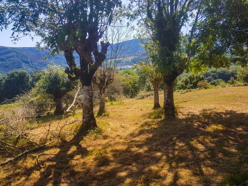 Εικόνα δύο δέντρων στην κοιλάδα Araiz με τα βουνά Aralar από την περιοχή Betelu, Navarra r στοκ εικόνες με δικαίωμα ελεύθερης χρήσης