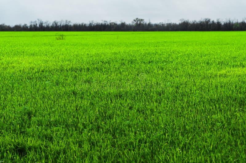 Εικόνα ενός τοπίου ενός πράσινου τομέα χλόης ή σίτου Η έννοια της ηρεμίας της οικολογίας και της άνοιξη στοκ εικόνα