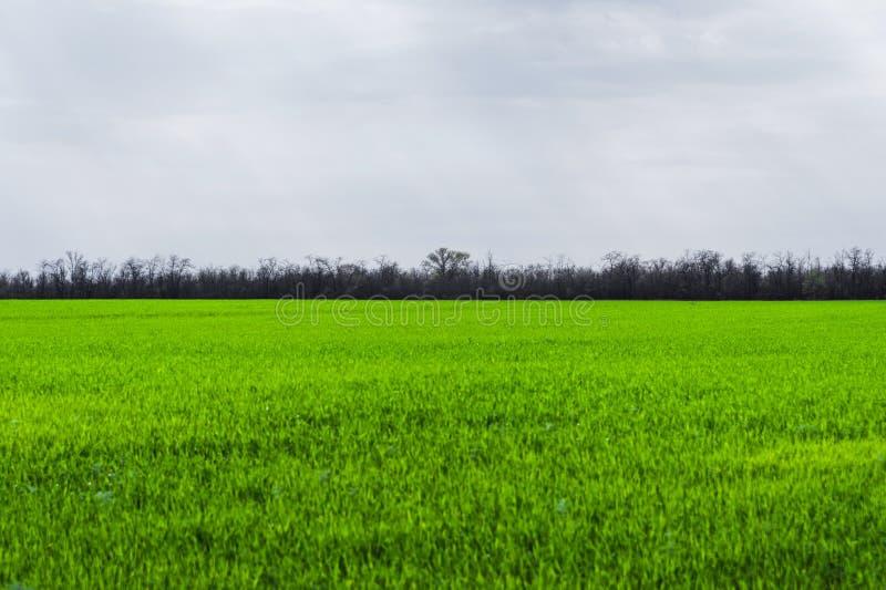 Εικόνα ενός τοπίου ενός πράσινου τομέα χλόης ή σίτου Η έννοια της ηρεμίας της οικολογίας και της άνοιξη στοκ φωτογραφία με δικαίωμα ελεύθερης χρήσης