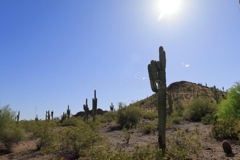 Εικόνα ερήμων και κάκτων με να λάμψει ήλιων στοκ φωτογραφία με δικαίωμα ελεύθερης χρήσης