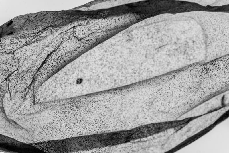 εικόνα ζουμ 4:1 μακρο του ξηρού δέρματος ντοματών στοκ φωτογραφία με δικαίωμα ελεύθερης χρήσης
