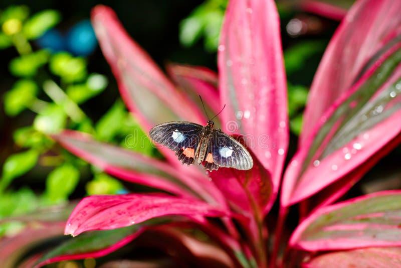 Εικόνα κινηματογραφήσεων σε πρώτο πλάνο μιας όμορφης πεταλούδας που προσγειώνεται σε έναν κλάδο δέντρων Με τα ζωηρόχρωμα λουλούδι στοκ φωτογραφία