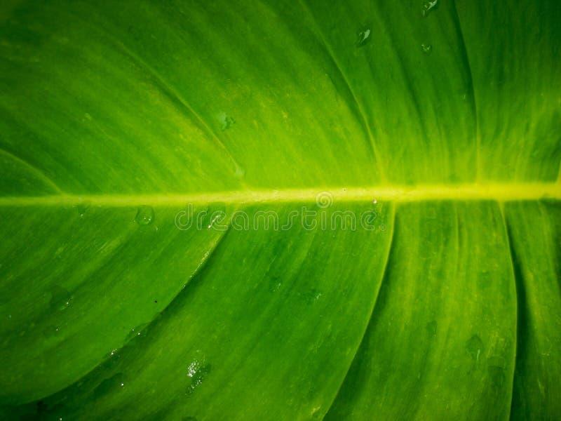 Εικόνα κινηματογραφήσεων σε πρώτο πλάνο, πράσινα φύλλα με το στάζοντας νερό στην κορυφή στοκ εικόνες